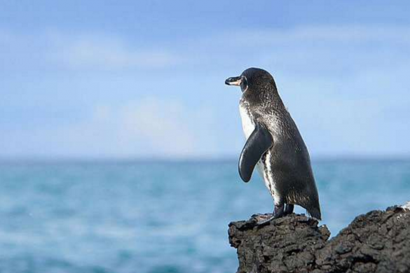 Galapagos7
