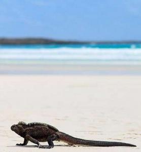 Galapagos8